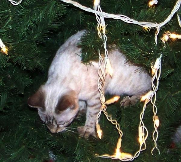 Moonbeam Kitten Looking For An Escape